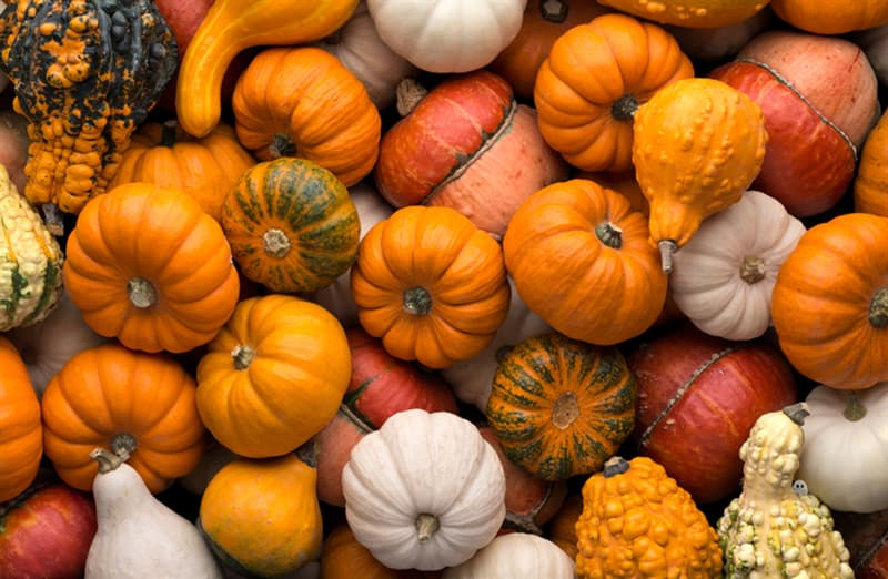 Science Story: Happy Halloween! Do you see a friendly ghost among these pumpkins?