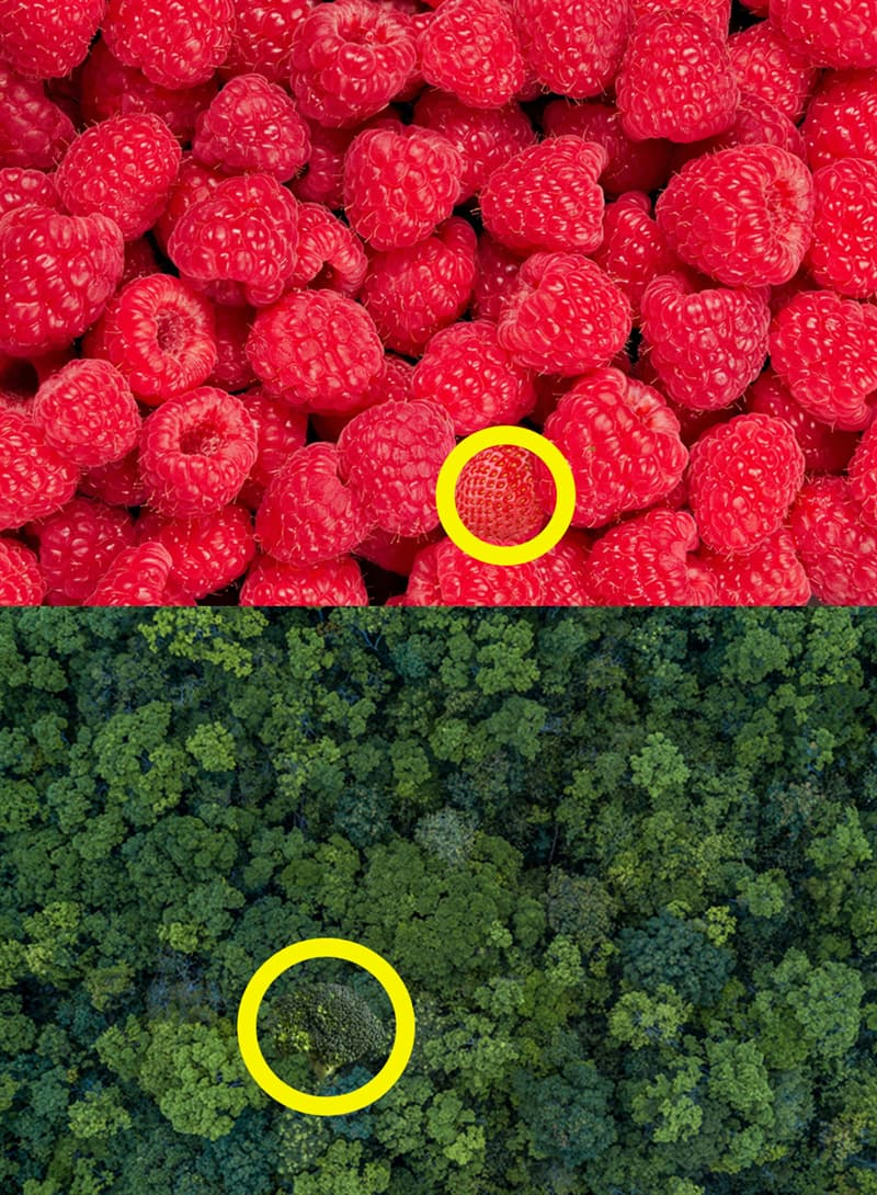 Science Story: A strawberry and broccoli: