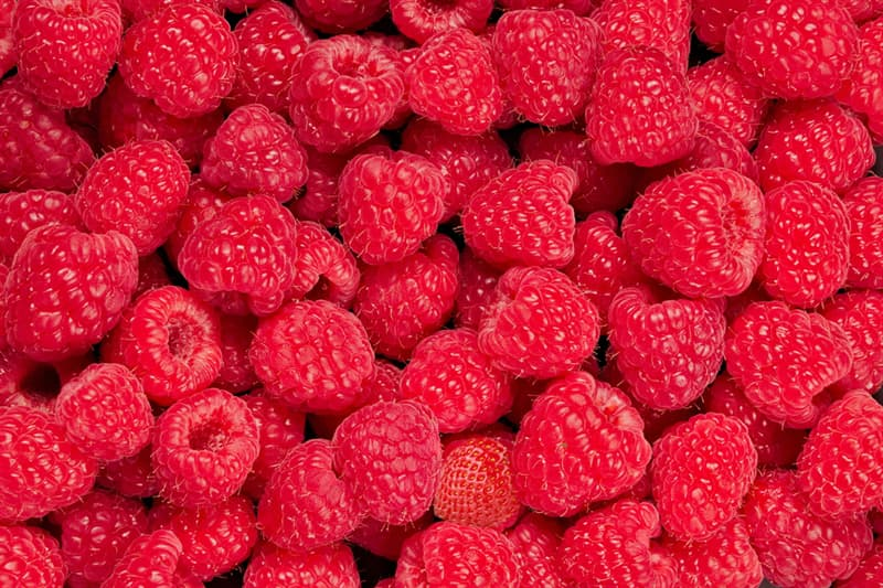 Science Story: There is a strawberry hidden among these raspberries: