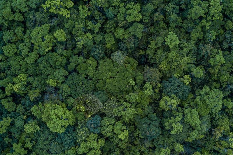 Science Story: Find broccoli:
