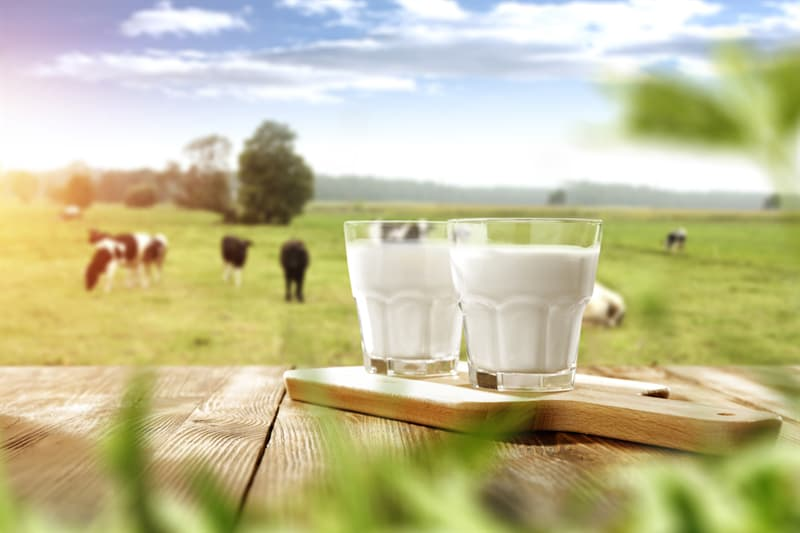 Science Story: #3 Milk is useful for our skeletal system