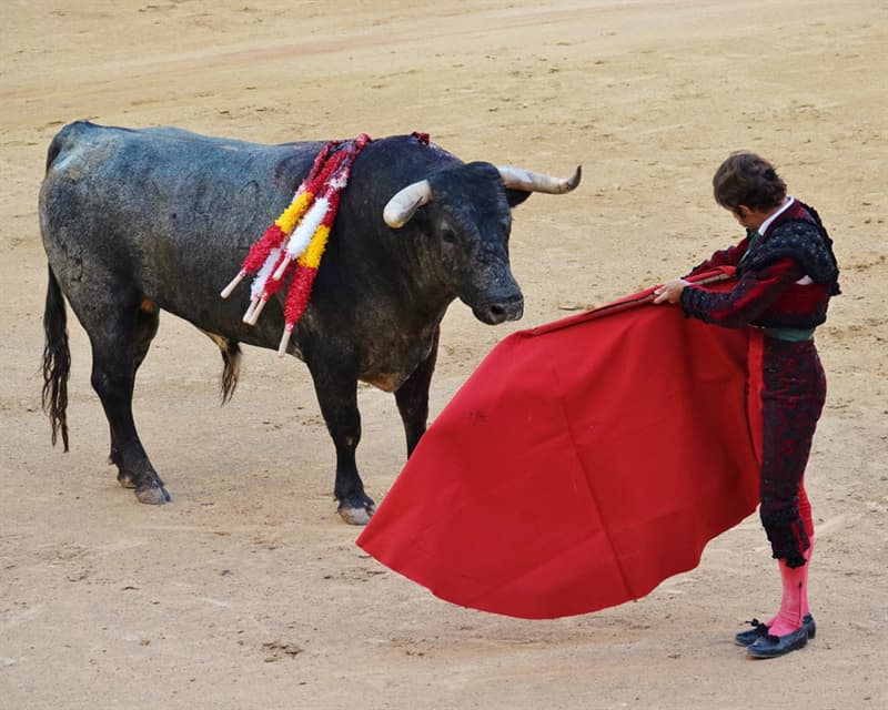 Science Story: #7 Bulls hate the red color
