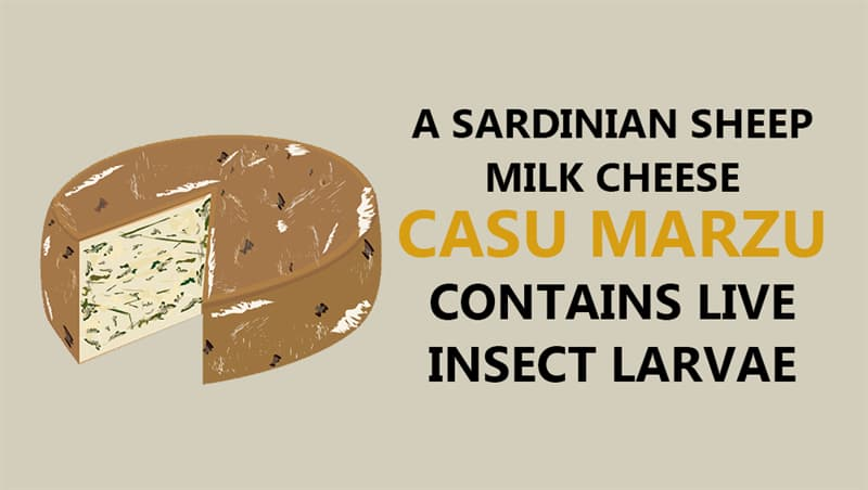 Culture Story: Casu marzu, a Sardinian sheep milk cheese, contains live insect
