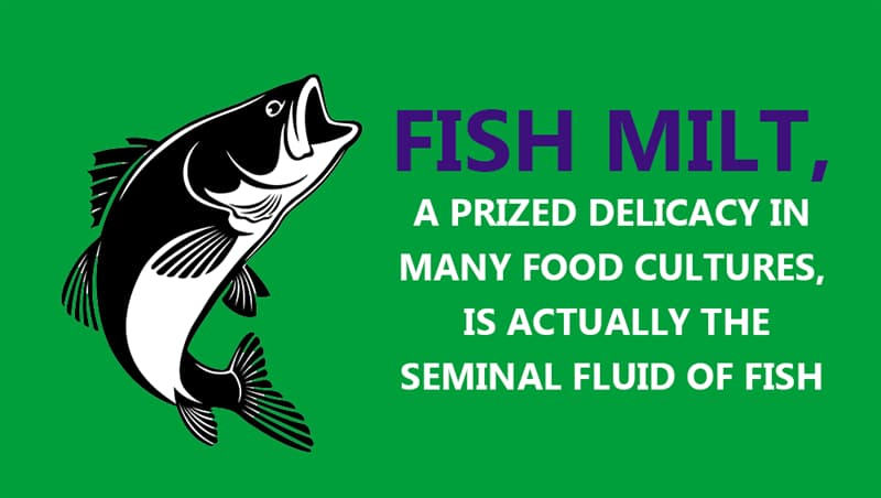 Culture Story: Fish milt, a prized delicacy in many food cultures, is actually the seminal fluid of fish
