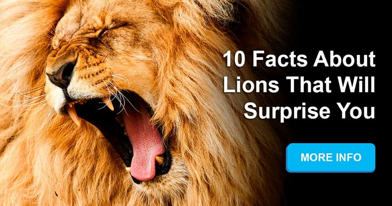 Nature Story: What are some mind blowing facts about lions?