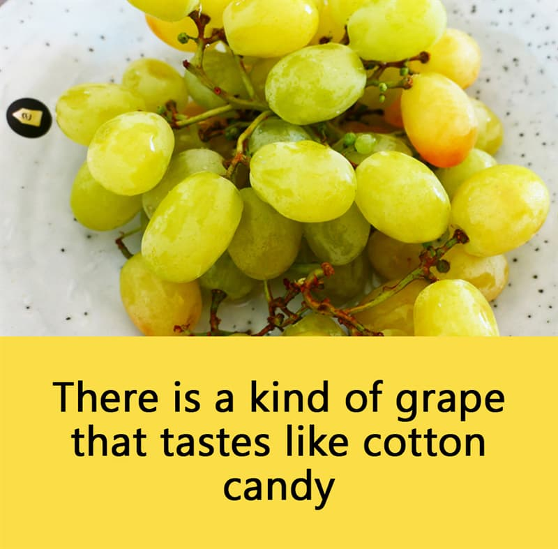 Science Story: There is a kind of grape that tastes like cotton candy.