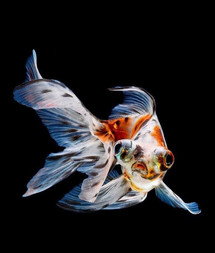 animals Story: Aquarium fish: hidden magnificence #13