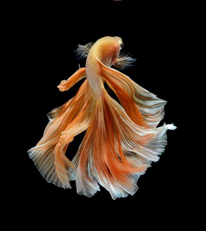 animals Story: Aquarium fish: hidden magnificence #2