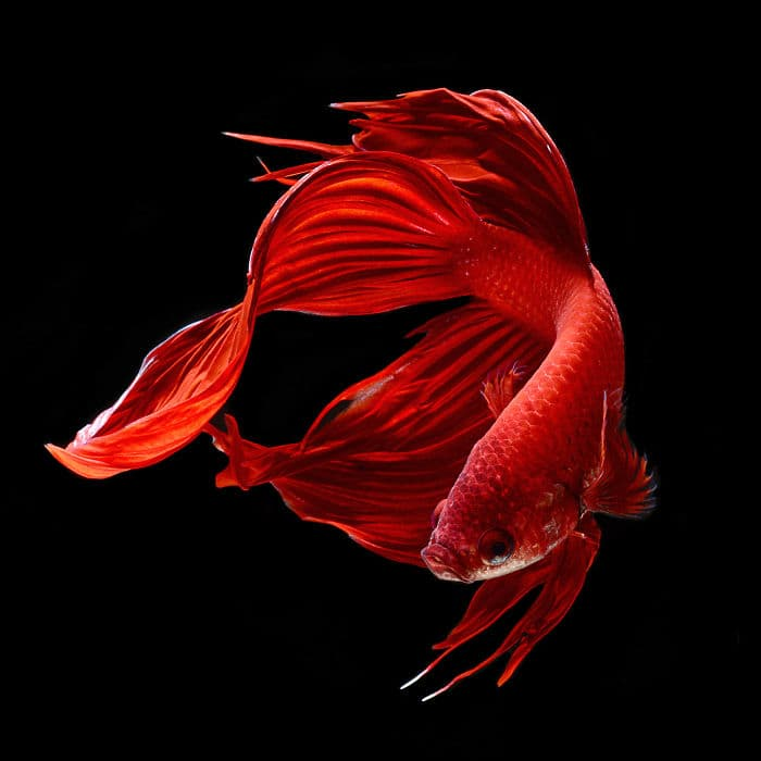 animals Story: Aquarium fish: hidden magnificence #11