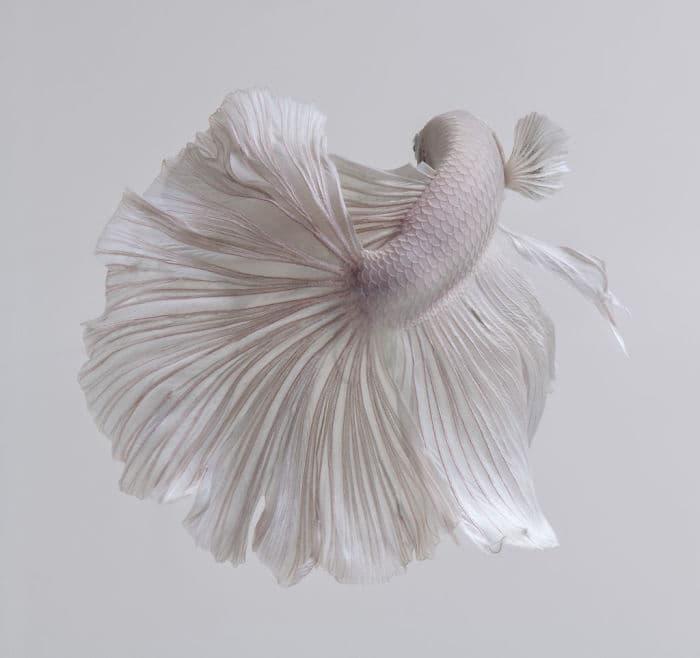 animals Story: Aquarium fish: hidden magnificence #12