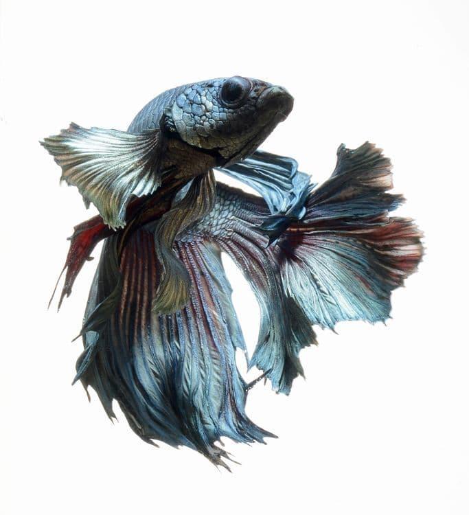 animals Story: Aquarium fish: hidden magnificence #14