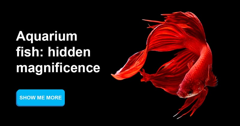 animals Story: Aquarium fish: hidden magnificence