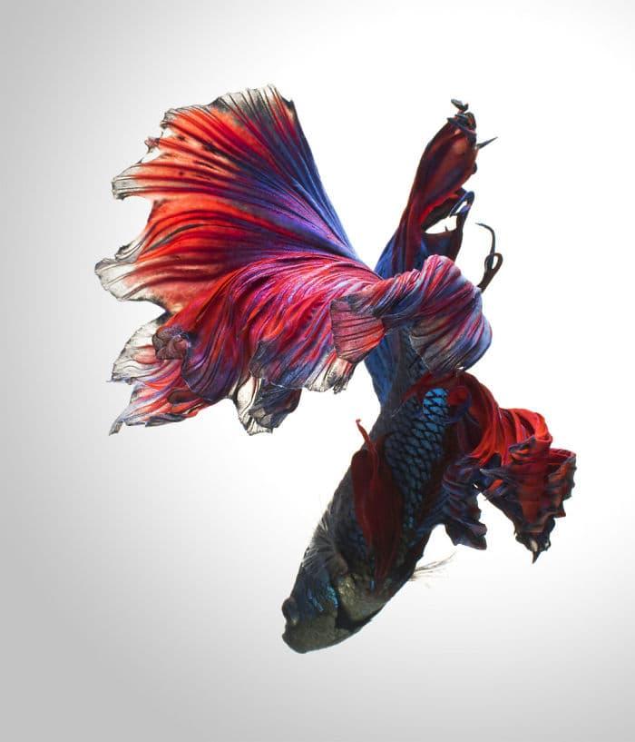animals Story: Aquarium fish: hidden magnificence #4