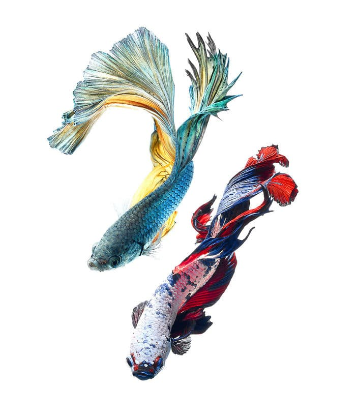 animals Story: Aquarium fish: hidden magnificence #5