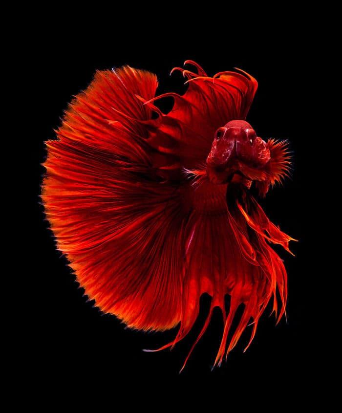 animals Story: Aquarium fish: hidden magnificence #7