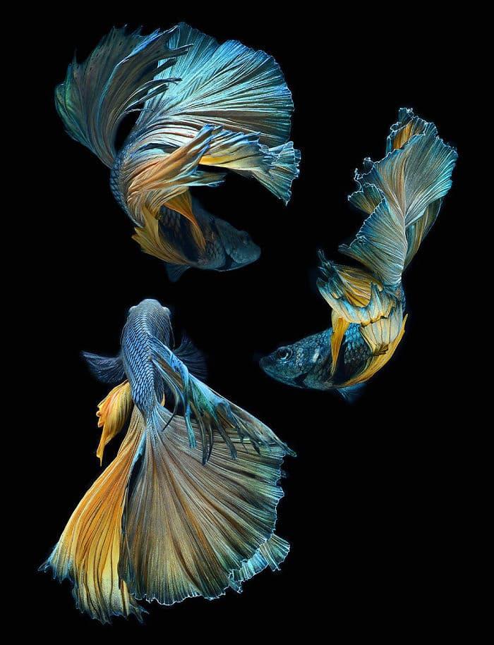animals Story: Aquarium fish: hidden magnificence #9