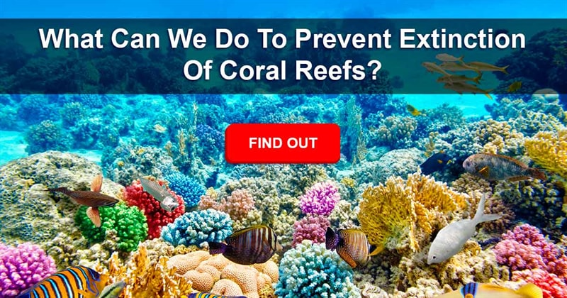 Geography Story: Coral Reefs Around The World Are In Grave Danger. Here's What's Happening