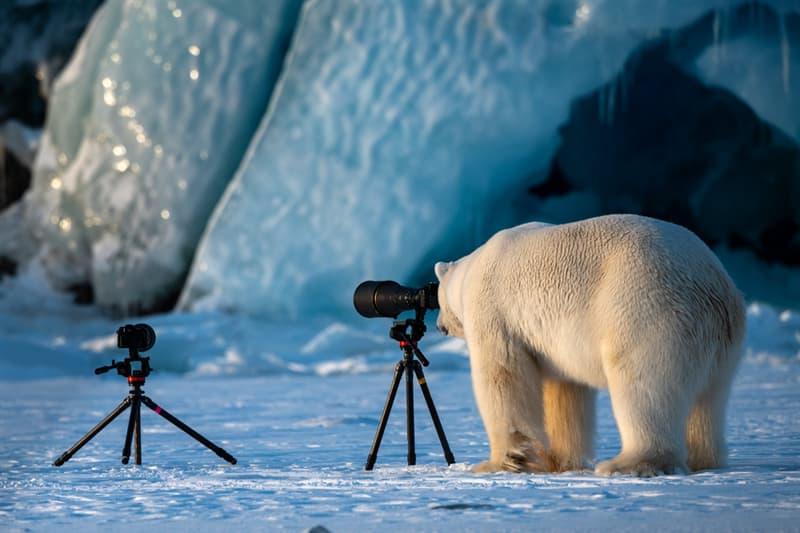 "Nature Story: #5 ""Wildlife PhotograBear"""