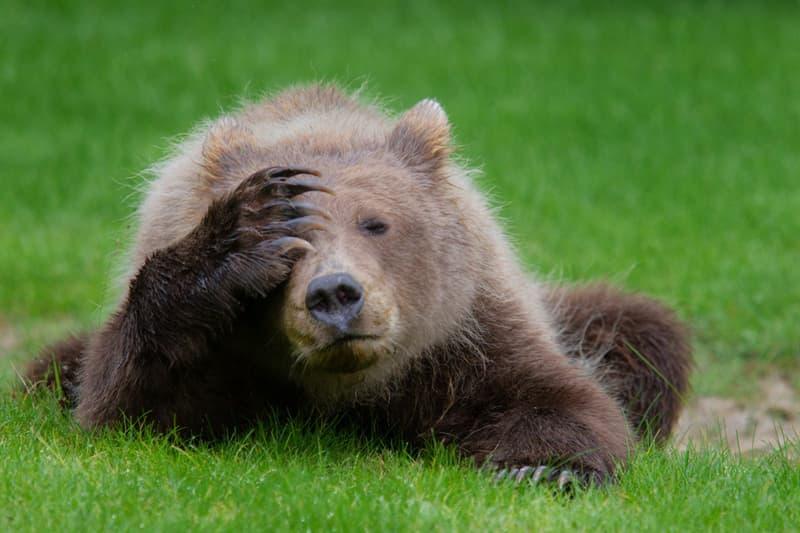 "Nature Story: #7 ""Coastal Brown Bear Cub with a Headache"""
