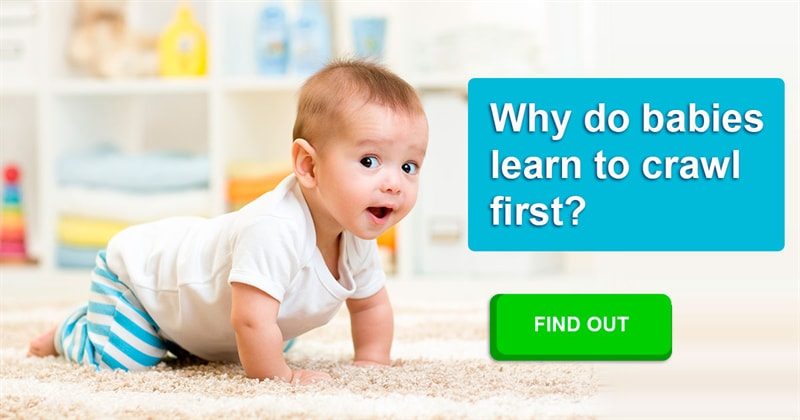 Society Story: Why do babies learn to crawl before they learn to walk?
