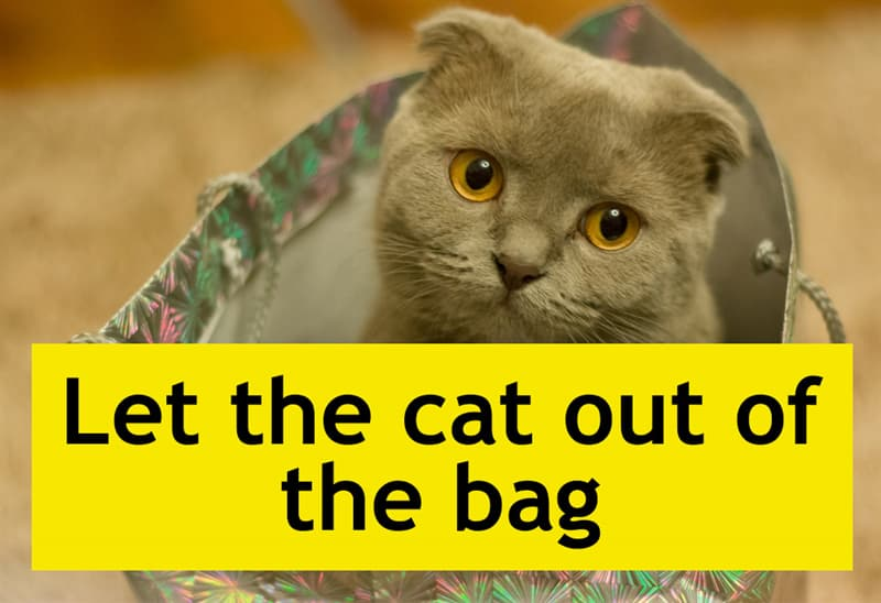 Culture Story: Let the cat out of the bag