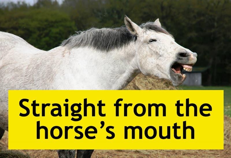 Culture Story: Straight from the horse's mouth