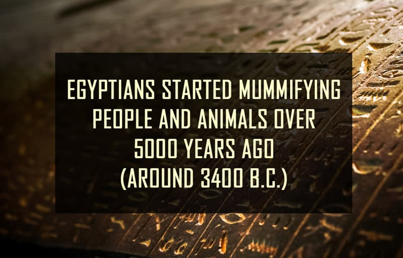 Science Story: Egyptians started mummifying people and animals over five thousand years ago (around 3400 B.C.)