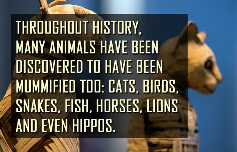 Science Story: Throughout history, many animals have been discovered to have been mummified too: cats, birds, snakes, fish, horses, lions and even hippos
