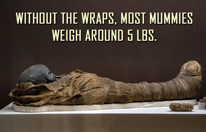 Science Story: Without the wraps, most mummies weigh around 5 lbs.