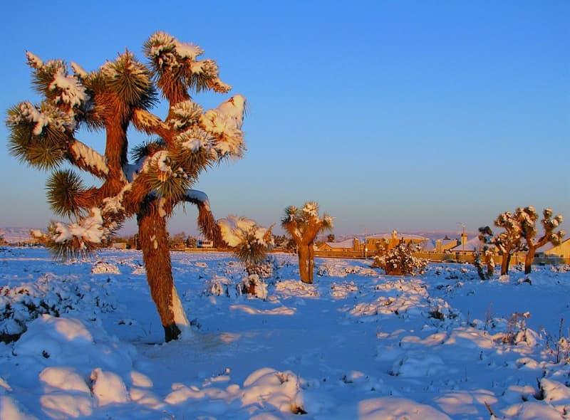 funny Story: #1 Snow in Mojave desert, USA