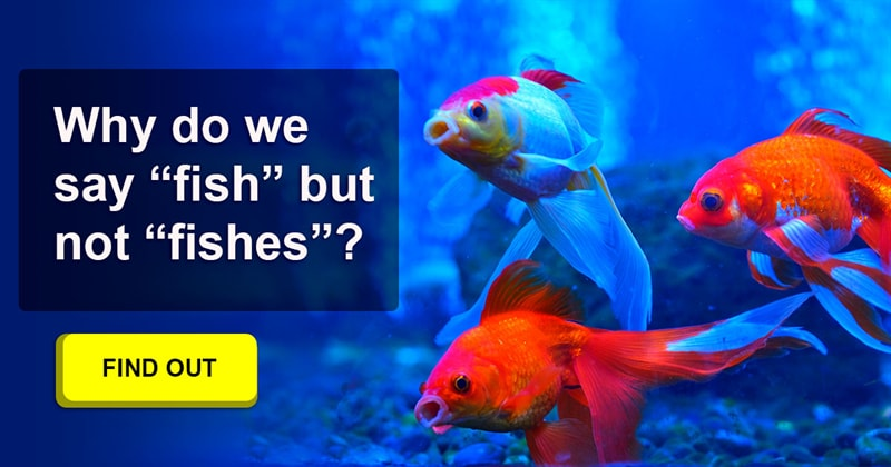"""Society Story: Why are there no """"fishes"""" in English?"""
