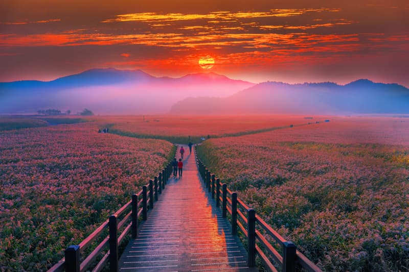 Geography Story: The beauty of the dawn sunrise at Suncheon bay, a coastal wetland located in the southern part of the country: