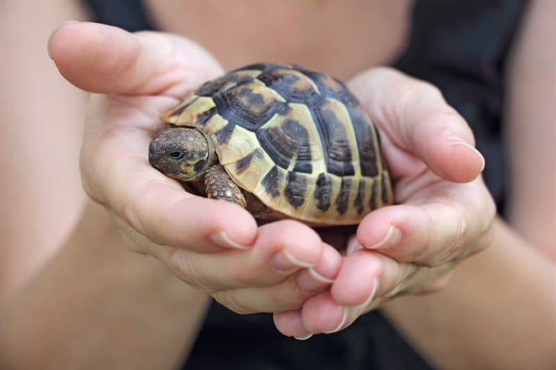 funny Story: #4 A pet turtle was found alive 30 years after it was lost