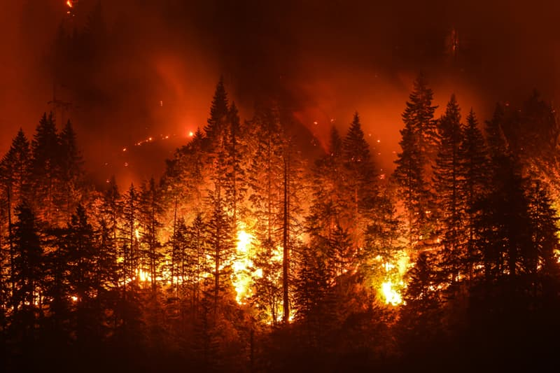 Geography Story: #4 Forest fire