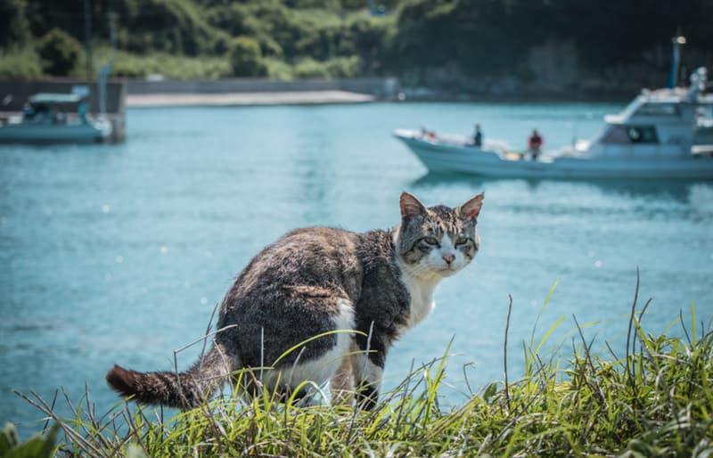 Nature Story: In Japan, there is a place where cats will be the first creatures to greet you and surround you whenever you go...