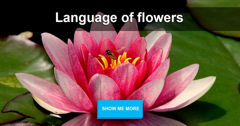 Nature Story: Language of flowers: facts you haven't heard before