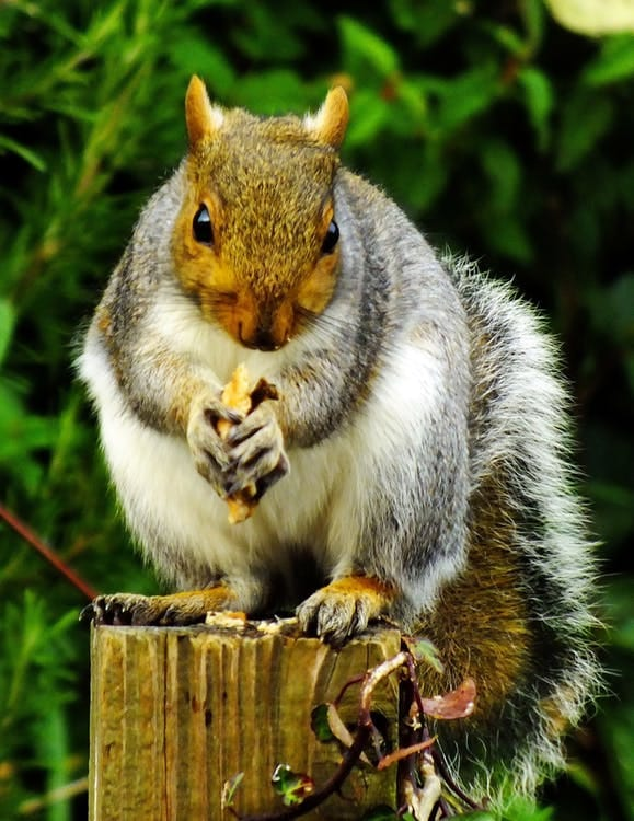Nature Story: Chipmunks can boast of the same ability.