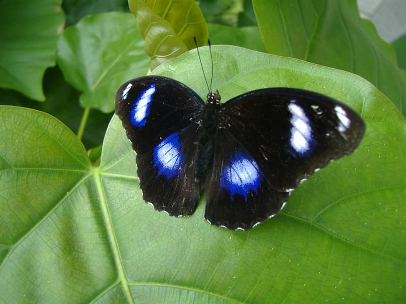 Nature Story: 10. The great eggfly