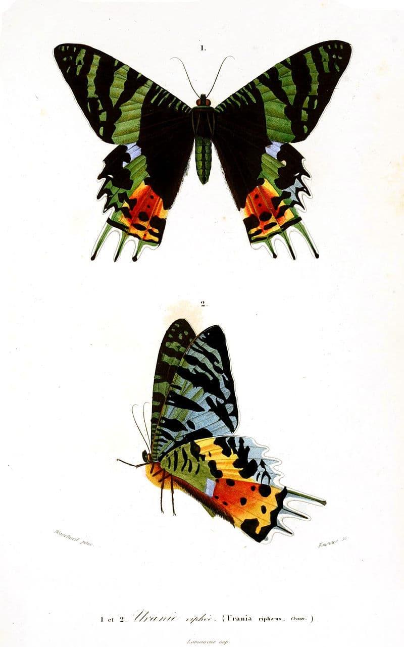 Nature Story: 3. Madagascan sunset moth