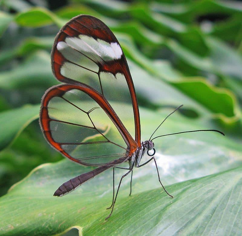 Nature Story: 4. Greta Oto