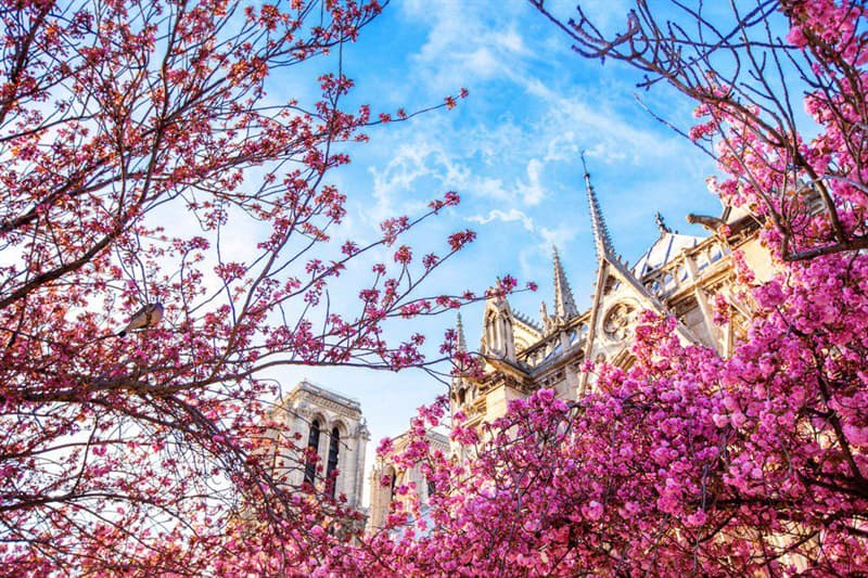 Geography Story: Interesting Facts about Notre Dame Cathedral You Probably Didn't Know #10