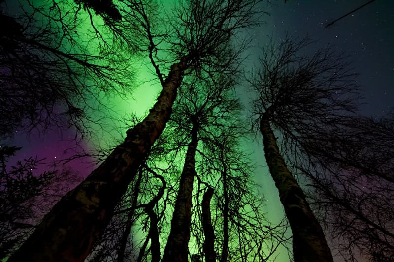 Nature Story: Pictures of night sky taken by professional photographers will take your breath away #9