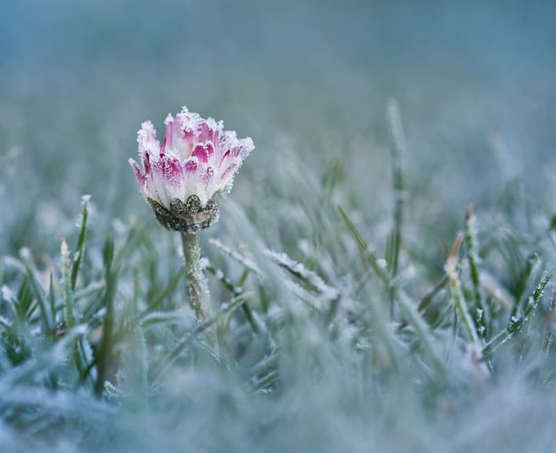 Nature Story: #5 Icy flower