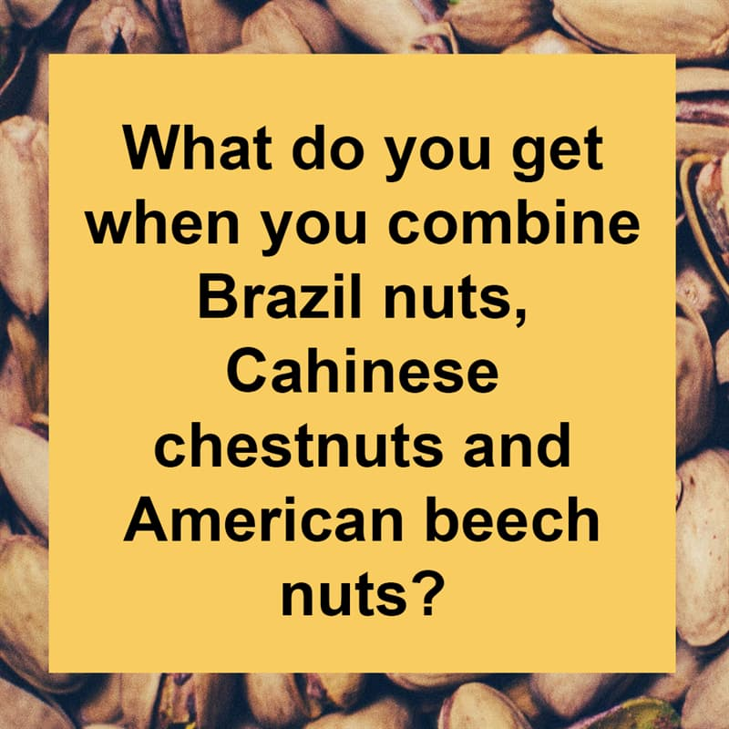 IQ Story: What do you get when you combine Brazil nuts, Chinese chestnuts and American beech nuts?