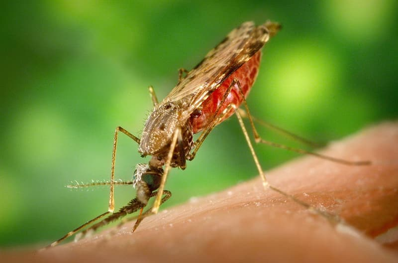 Nature Story: #3 Mosquitoes