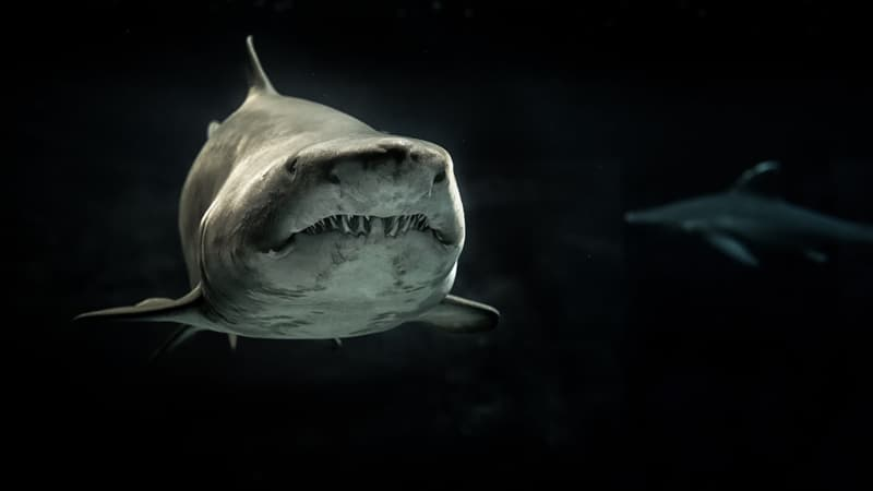 animals Story: A shark is one of the most ancient creatures of the ocean. Its anatomy gives an impression that it was made for killing. Look at these sharp teeth!