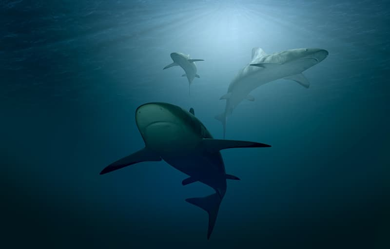animals Story: Let's compare sharks and dolphins. Obviously, a shark is more dangerous than a dolphin. However sharks have a peculiarity: they prefer hunting alone while dolphins mostly have a company. Thus a good company of dolphins is stronger than a shark.