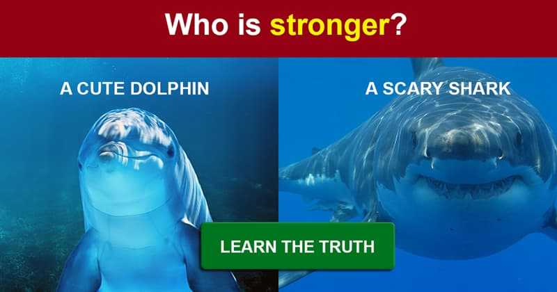animals Story: Dolphins versus sharks: who is more dangerous?