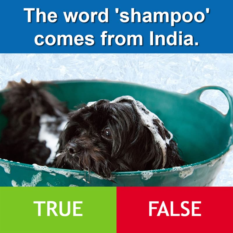 Culture Story: The word 'shampoo' comes from India.