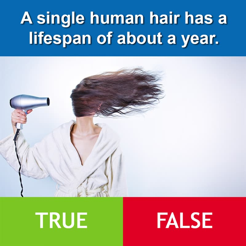 Culture Story: A single human hair has a lifespan of about a year.